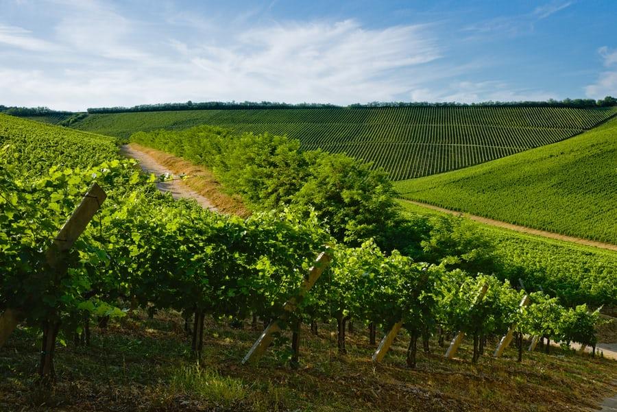 Opatrenia na podporu vinohradníctva